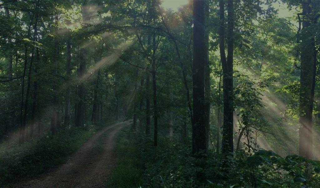oak-forest-img